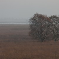 20111029_Rehdener Moor_00006