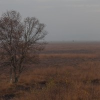 20111029_Rehdener Moor_00007