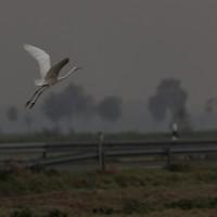 20111029_Rehdener Moor_00012
